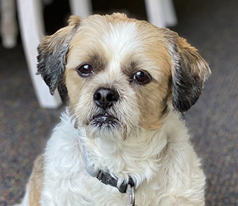 Buster, one of many dogs rescued by partner Law Wright.